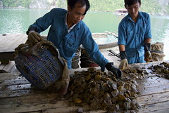 Pearl Farmers of Halong