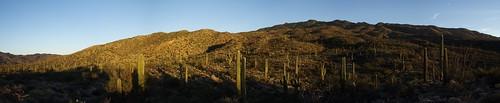 sunset sunsetlight saguaronationalpark goldenhour rinconmountains saguaronationalparkeast garwoodtrail saguaronationalparkrinconmountaindistrict garwoodtrail20141116 saguaronationalparkrinconmountaineastdistrict