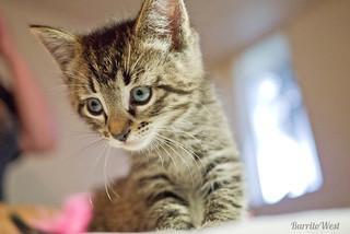 kitten-15b