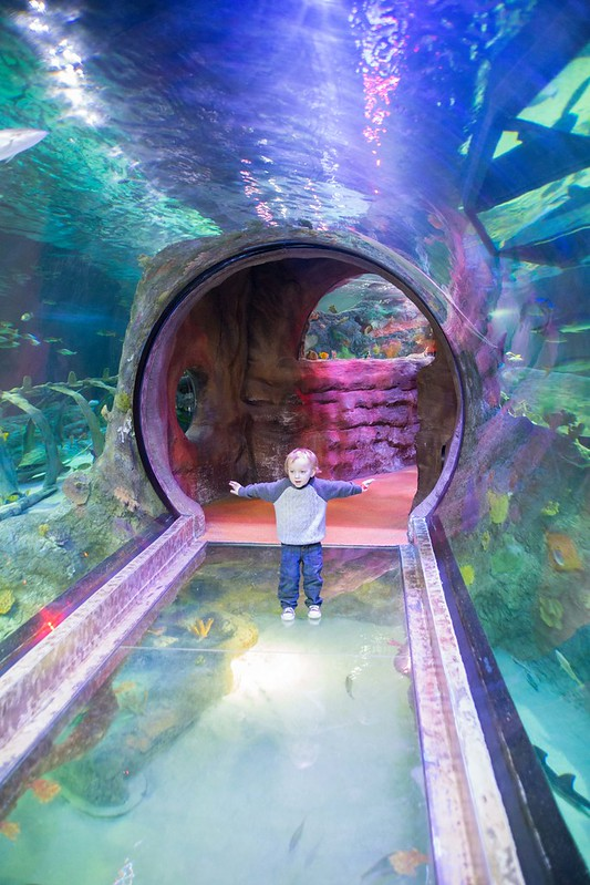 Water Tunnel at SeaLIFE Grapevine