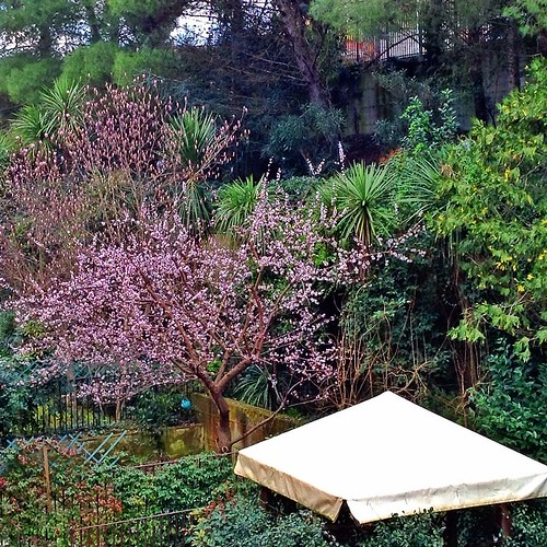 flowers trees greenleaves green nature gardens alberi garden backyard view natura gazebo fiori giardini scorcio springiscoming pinkflowers naturelovers endofwinter floweringtrees goodbyewinter almostspring dietrocasa fiorirosa foglieverdi quasiprimavera alberiinfiore snapseed uploaded:by=flickstagram instagram:venuename=condominio22parcodeigerani22 instagram:venue=47762498 instagram:photo=662266298588664920247096476