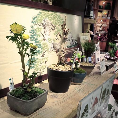 ハンズ渋谷の、盆栽カフェ。もう少しで盆栽買いそうになった。ワークショップの作品ネタとして。