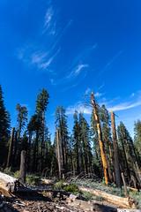 Kings Canyon & Sequoia - 133