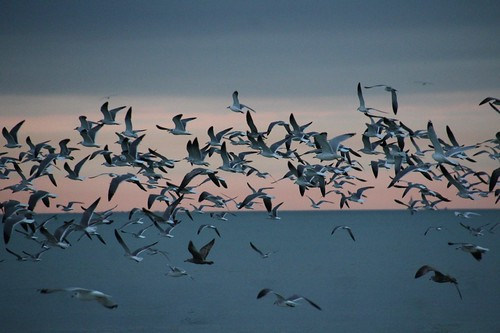 blue sunset sky seagulls water mexico flying key gulf longboat