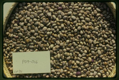 P09-016 CF01 S2