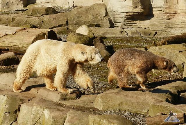 Zoo am Meer 08.03.2015  104