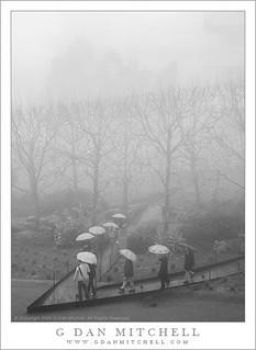 Umbrellas and Fog