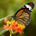 Butterfly farm 3 by Julian Provis