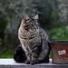 Cat elegance by annfrau