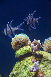 Speyer aquarium 2016