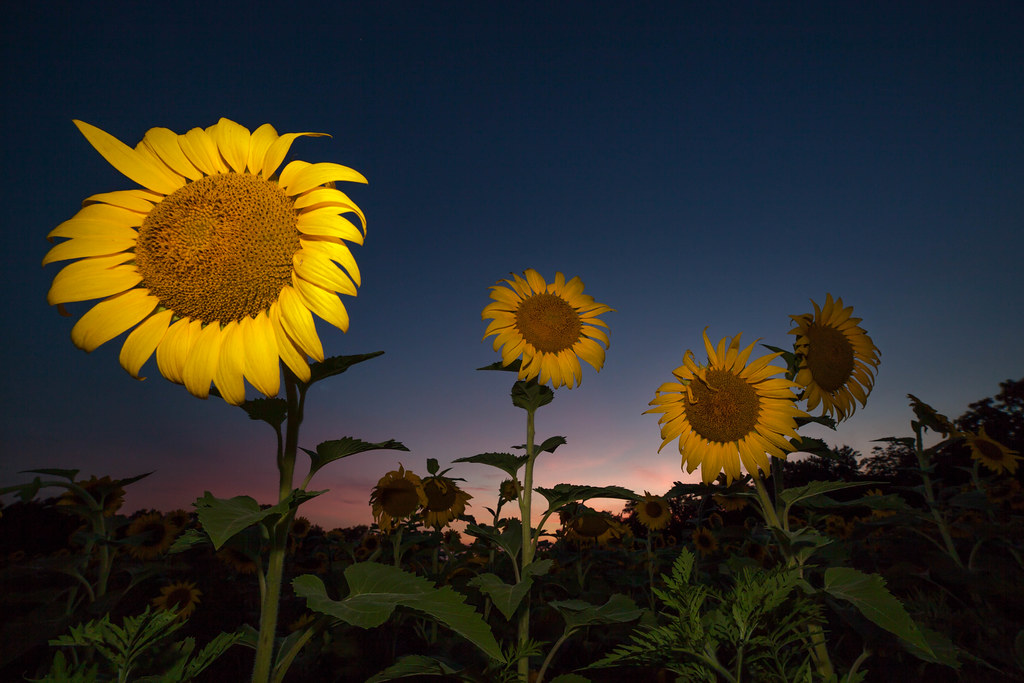 Barnesville Rd, Boyds, MD, USA Sunrise Sunset Times