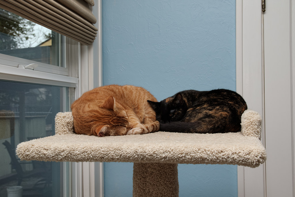Our oldest cat Sam and our youngest cat Trixie snuggling and sleeping on the top shelf of the cat tree