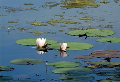 Wantagh Twin Lakes - North Lake (9)