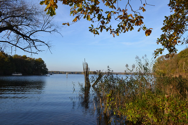 Jungfernheide Forst Berlin_ Tegeler See lake with autumn foliage