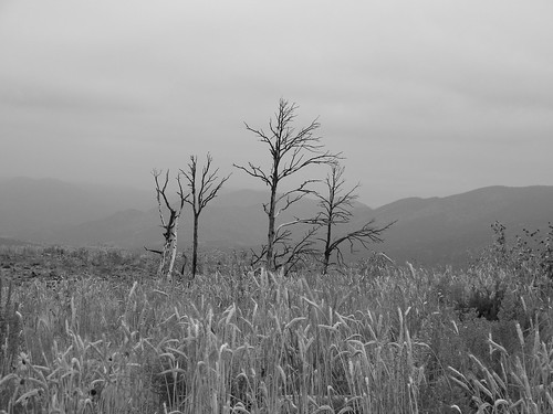 winter bw nature landscape colorado dry royalgorgepark