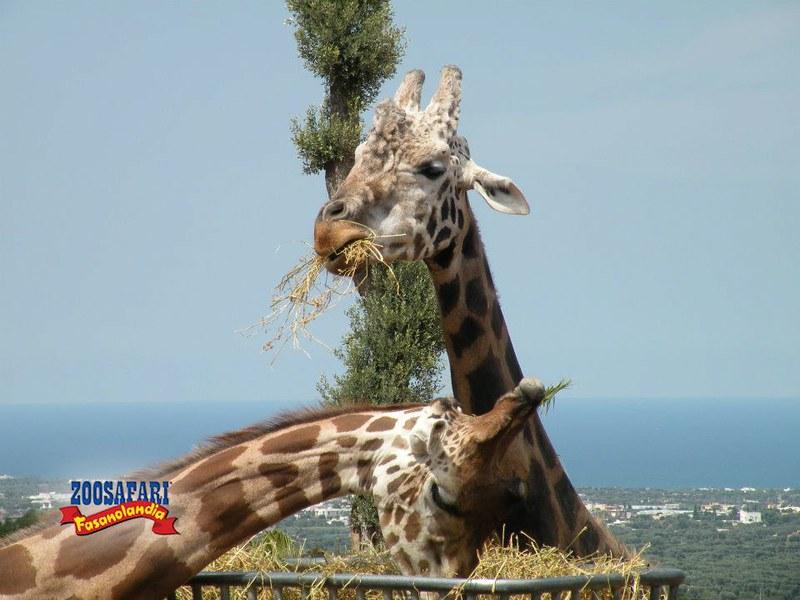 natale-zoosafari-1