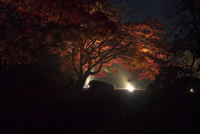 Nikon 1 V1 + 1 NIKKOR 32mm f1.2 六義園の紅葉ライトアップ 2014年12月1日