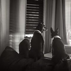 Dog conference! #dog #animals #nature #blackandwhite #blackandwhitephotography @eduardontavares