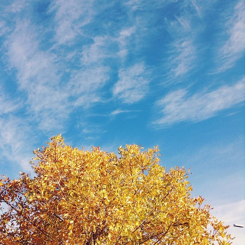 My tree is so yellow! ����