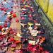 leaves-2 by Yosi Oka