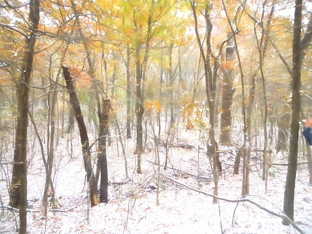 Turkey Mountain Snow - November 2014