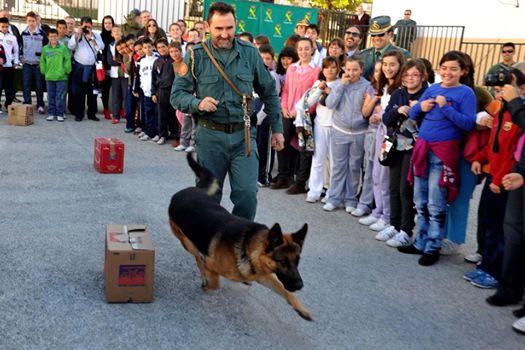 AionSur 16104170664_7f6108fa3c_o_d La Guardia Civil organiza el día 24 de marzo en El Ruedo una jornada con exhibiciones de sus cuerpos especiales Educación