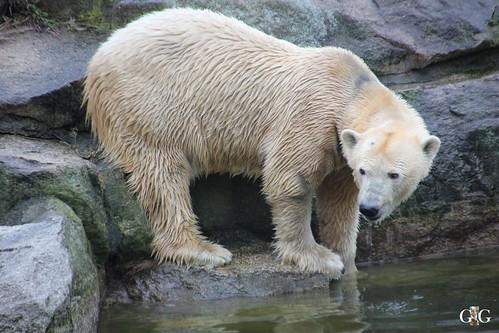 Sonntags Besuch im Zoo Berlin 25.01.2015 13