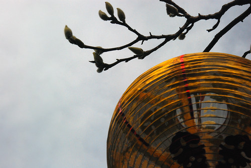 Chinese New Year Lantern in Dr. Sun Yat Sen Garden, Vancouver
