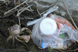 Detour - More trash thrown ashore!
