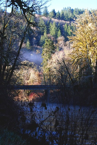 Early Morning on the Alsea River
