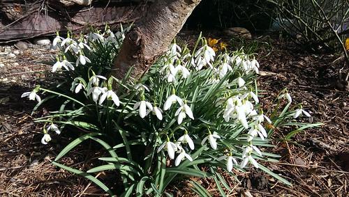 Spring arrived...