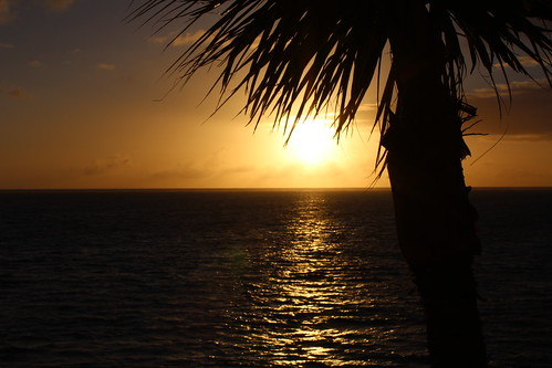 ocean sunrise palmtree mauritius letouessrok
