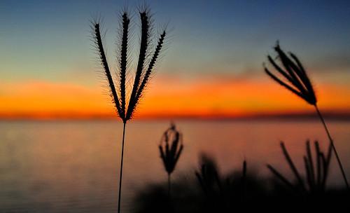 sunset sea grass meer sonnenuntergang gras kati kuba 2014 caribbeansea karibik playaancón sanctispíritus nikon1v1