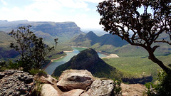 Artistic Trees, Blyde River Canyon Viewpoint, Blyde River Canyon Nature Reserve, Mpumalanga, South Africa