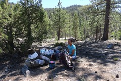 852 Vicki decides to take a comfy siesta near Van Dusen Canyon Road while I hike on to get the car