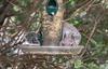Squirrel in the Bird Feeder 2