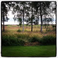 God morgon i norrbottniska färger. Svalt och skönt ute så här före sju på morgonen.