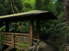 Guadua Bridge