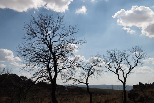 Siluetas entres nubes #alcoba #castillalamancha #igersciudadreal #arboles