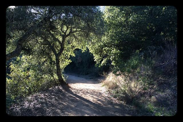 Trail on Mt Madonna.