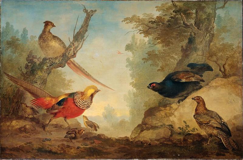 Aert Schouman - Goudfazanten met kuikens en korhoenders in een landschap (c.1730)