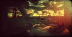Black Kite Sunset