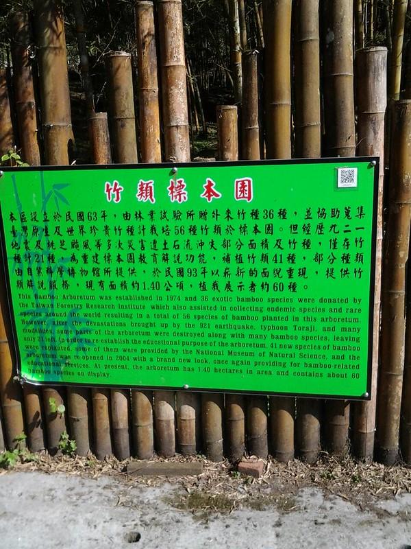5941神奇多樣的竹類