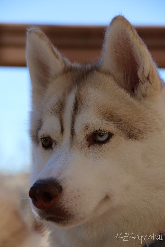 IMG_4946MagsPortrait