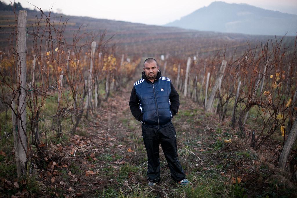 Fercsák László az Olaszliszka melletti szőlőben | Fotó: Magócsi Márton