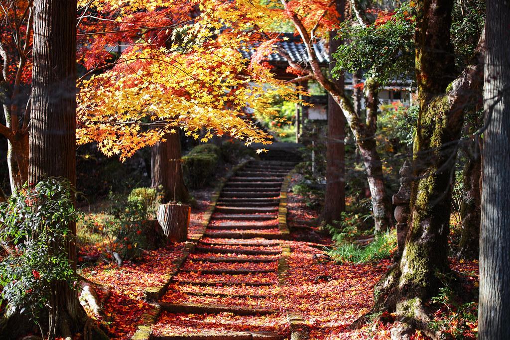 散紅葉の階段