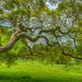 Branches of a Japanese Maple Tree by Michael Ver Sprill