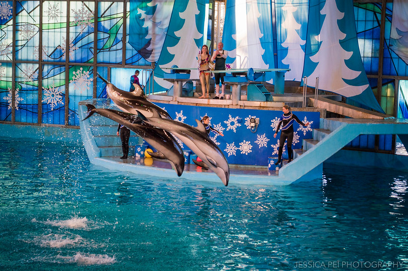 Dolphin Christmas Show Sea World