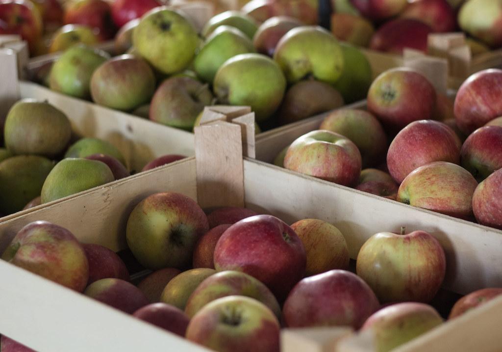 Æblemost (1)