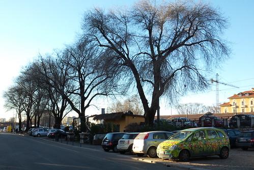 L'auto primaverile e gli alberi invernali
